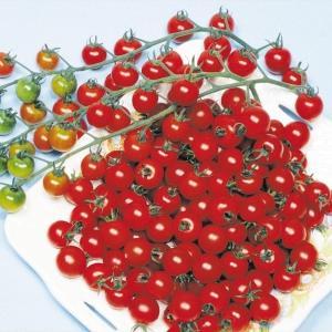 野菜たね トマト チェリークイーン 1袋(1ml) / 種 タネ kokkaen