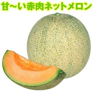 野菜たね メロン F1赤肉ネットメロン 1袋(1ml)|kokkaen