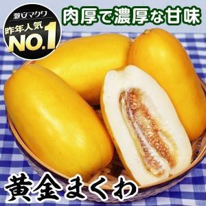 野菜たね メロン F1黄金まくわ 1袋(1ml) / 種 タ...