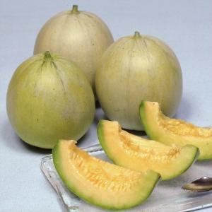 野菜たね メロン F1うまメロン 1袋(2ml) / 種 タ...