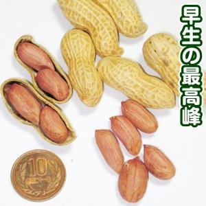 野菜たね 落花生 ゆで落花生郷の香PVP 1袋(30ml) / 種 タネ kokkaen