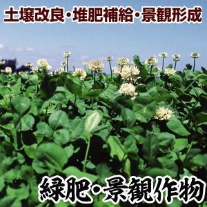 野菜たね 緑肥・景観作物 クローバー白花 1袋(0.5kg)