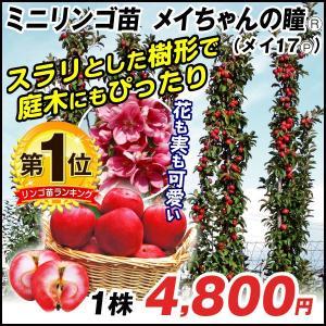 果樹苗 リンゴ メイちゃんの瞳(メイ17P) 1株 / 果物苗 フルーツ苗 林檎 りんご kokkaen