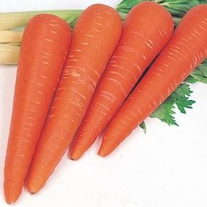 種 野菜たね ニンジン 鮮紅太長人参 1袋(10ml入)/タネ たね 人参 にんじん