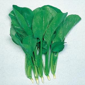 【野菜たね】【野菜種】【種】 商品情報 光沢ある大型濃緑丸葉 栄養豊富な健康野菜。家庭で作れば鮮度は...