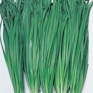 種 野菜たね 健康野菜 大葉ニラ 1袋(5ml入)/タネ たね ニラ 韮 葉菜