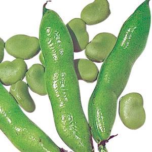 商品情報 約3cmの大粒豆として有名!甘味強く美味しい。 お届け状態 種 早晩性 晩生 莢長(約) ...