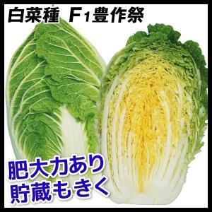 種 野菜たね ハクサイ F1豊作祭 1袋(3ml入)/タネ たね 白菜 はくさい