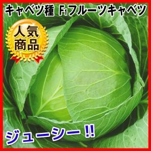 種 野菜たね キャベツ F1フルーツキャベツ 1袋(2ml入)/タネ たね きゃべつ 葉菜