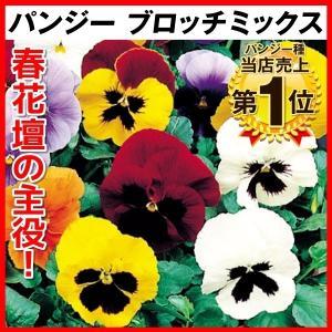 種 花たね パンジー ブロッチミックス 1袋(100mg)/タネ たね