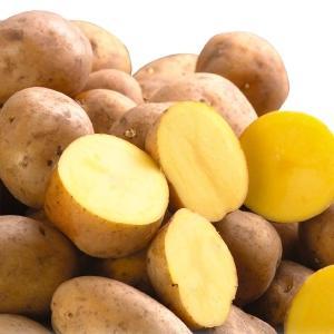 じゃがいも種芋 インカのめざめP 1kg / ジャガイモ 馬鈴薯 たね芋 たねいも