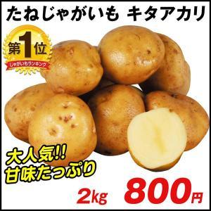じゃがいも種芋 キタアカリ 2kg / ジャガイモ 馬鈴薯 たね芋 たねいも