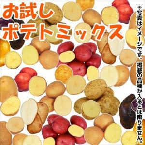 じゃがいも種芋 お試しポテトミックス(品種見計らい・名称付) 10種1kg / ジャガイモ 馬鈴薯 たね芋 たねいも