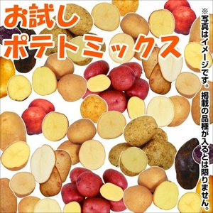 じゃがいも種芋 お試しポテトミックス(品種見計らい・名称付) 10種2kg / ジャガイモ 馬鈴薯 たね芋 たねいも