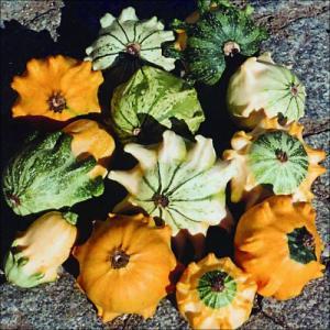 花たね おもちゃかぼちゃ クラウンミックス 1袋(5粒)|kokkaen