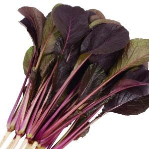商品情報 葉軸と葉脈が赤紫色に染まる珍しい小松菜。生育が速く、暑さ・寒さに強いので、収穫幅が広い。エ...