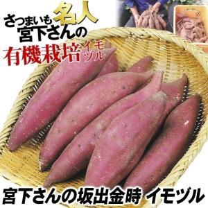 イモヅル(芋づる) 宮下さんの坂出金時イモヅル 100本 / さつまいも苗 サツマイモ苗 薩摩芋|kokkaen