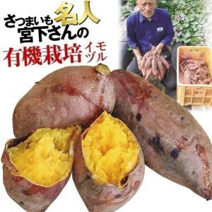 イモヅル(芋づる) 宮下さんの安納芋イモヅル 25本 / さ...