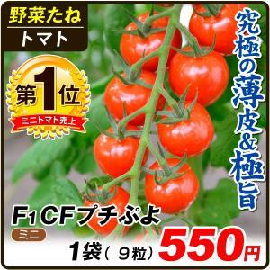 野菜たね トマト F1 CFプチぷよ 1袋(10粒) / 種 タネ