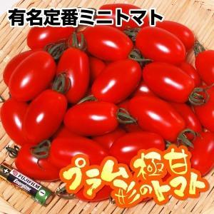 種 野菜たね トマト F1アイコ 1袋(10粒) / 野菜の種 ミニトマト 国華園