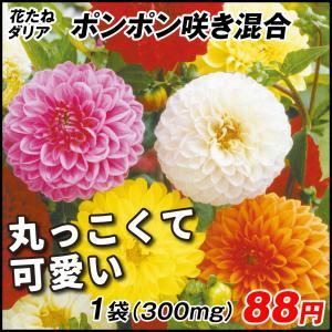 花たね 花たね ダリア ポンポン咲混合 1袋(300mg)|kokkaen