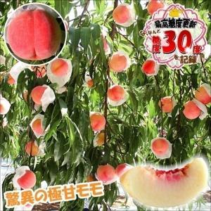 果樹苗 モモ 桃水こまち 富士野生桃R 1株 / 果物苗 フ...
