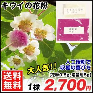 果樹苗 資材 キウイの花粉 1組 / 果物 苗 フルーツ キ...