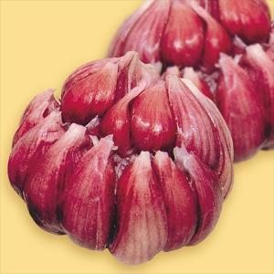 ニンニク種球 赤にんにく 10片の商品画像