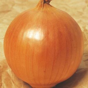 玉ねぎ苗 F1もみじ3号 100本 / 国華園|kokkaen