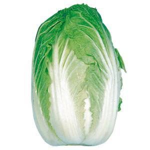 種 野菜たね ハクサイ 京都三号白菜 1袋(5ml入)/タネ たね 白菜 はくさい
