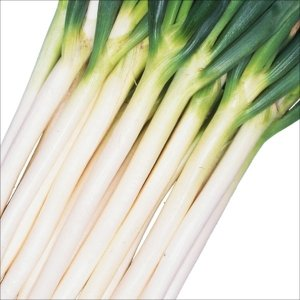 種 野菜たね ネギ 早太り一本 1袋(8ml入)/タネ たね ねぎ 葱