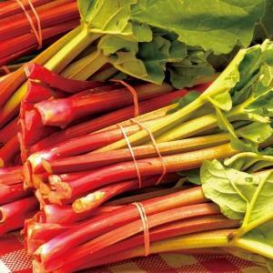 種 野菜たね ハーブ ルバーブ 1袋(2ml入)/タネ たね
