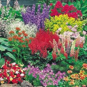 種 花たね 宿根草ミックス 1袋(200mg)/タネ たね