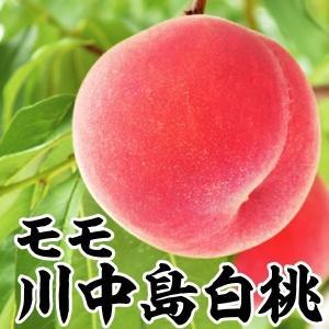 果樹苗 モモ 川中島白桃 1株...