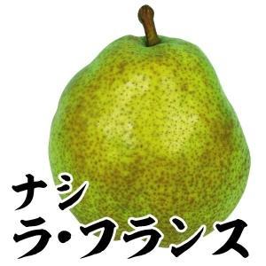 果樹苗 ナシ 洋梨 ラ・フランス 1株