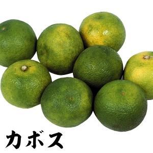 果樹苗 カンキツ カボス 特等苗 1株|kokkaen