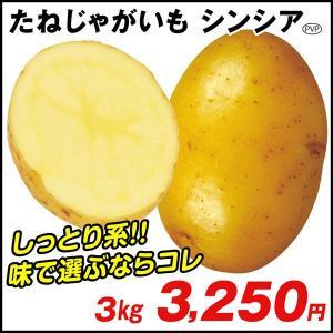 じゃがいも種芋 シンシアP 3kg / ジャガイモ 馬鈴薯 たね芋 たねいも