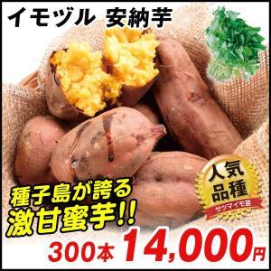 イモヅル(芋づる) 安納芋イモヅル 300本 / さつまいも...