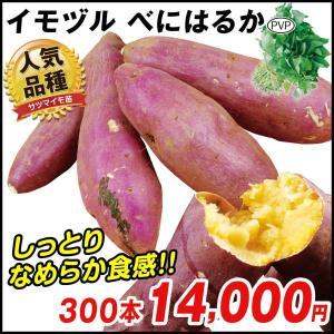イモヅル(芋づる) べにはるかPイモヅル 300本 / さつまいも苗 サツマイモ苗 薩摩芋|kokkaen