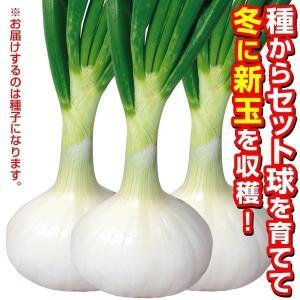 野菜たね タマネギ 冬どり玉葱 白 1袋(3ml)|kokkaen