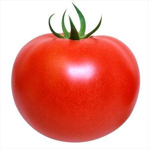 野菜たね トマト F1こくうまパーフェクトEX 1袋(1ml)