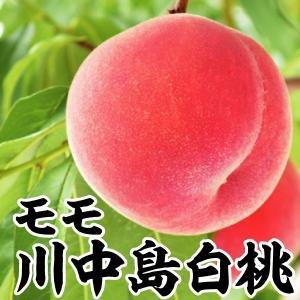 果樹苗 モモ 川中島白桃 1株 / 果物苗 フルーツ苗...