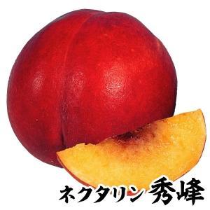 果樹苗 ネクタリン 秀峰 1株 / 果物苗 フルーツ苗...