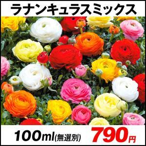 秋植え球根 ラナンキュラス ミックス(無選別) 100ml / 花の球根 きゅうこん ハナキンポウゲ 花金鳳花