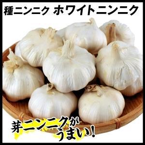 ニンニク種球 ホワイトニンニク(種球 )(中国産) 1kg