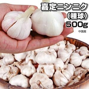 ニンニク 種球 嘉定ニンニク  (種球) (中国産) 500g / にんにく 種ニンニク 大蒜 たね タネ 球根 ガーリック