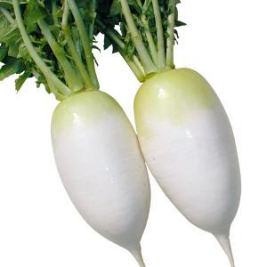 種 野菜たね ダイコン F1秀太郎 1袋(5ml入)/タネ たね 大根 だいこん kokkaen