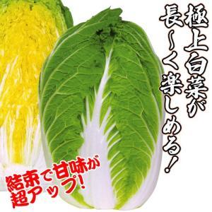 種 野菜たね ハクサイ F1黄龍 1袋(2ml入)/タネ たね 白菜 はくさい
