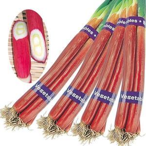 種 野菜たね ネギ 赤根深葱 1袋(10ml入)/タネ たね ねぎ 葱
