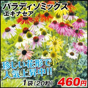 種 花たね 切花向き多年草 エキナセア パラディーソミックス 1袋(20粒)/タネ たね